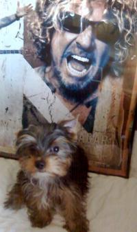 Sammy meets Sammy....